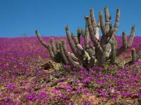 Far fiorire il deserto: per una riforma del dottorato di ricerca